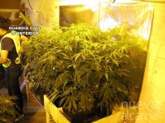 Detenida una persona en Azuqueca por cultivar marihuana