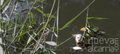 Ecologistas insiste en que los peces murieron por contaminación