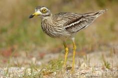 La población de aves ha caído un 30 % en los últimos 25 años en la comarca de Brihuega