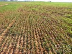 El Gobierno regional reclama al Ministerio que atienda a los agricultores de Castilla-La Mancha que también sufren sequía