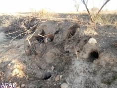 Asaja C-LM convocará movilizaciones por los daños a agricultores de la plaga de conejos y la fauna silvestre