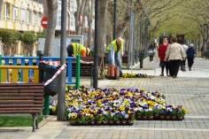 Más de 4.000 flores y casi 500 metros cuadrados de césped para arrancar la campaña de plantación de primavera