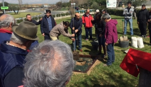Plantado en Torrejón un olmo libre de grafiosis