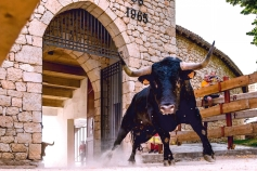 Toro Alcarria convoca su concurso de Fotografía Taurina