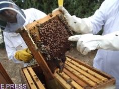 Las ayudas a mejorar la producción de la miel ascienden a 725.838 euros