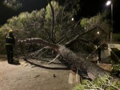 Espectacular caída de un árbol en medio de la carretera de Humanes