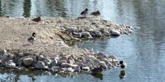 Becas de prácticas para estudiantes de Ciencias Ambientales en la Reserva Ornitológica Municipal