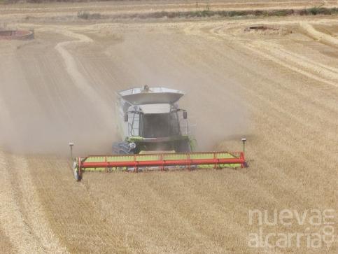 La 'locura' climatológica marca  una desastrosa cosecha del cereal