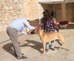 Fuentenovilla acoge su II Concurso Nacional Canino