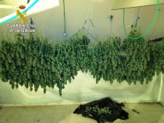 Cuatro detenidos por tráfico de drogas y cultivo de marihuana