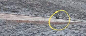Nuevo avistamiento de la pantera de la Sierra Norte