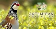 Fundación Artemisan anima a los cazadores de toda España a participar en el primer censo nacional de perdiz roja