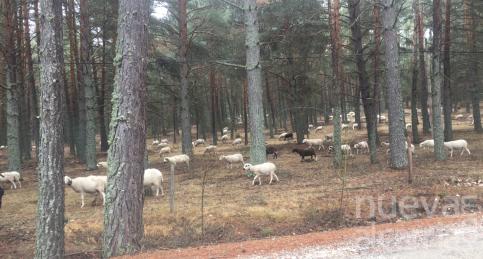 Taller de pastores en Checa