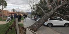 Cuatro vehículos afectados por la caída de un árbol en el parque de la Constitución de Azuqueca