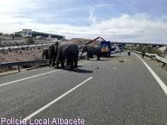 Vuelca en la A-30 un camión que transportaba elefantes
