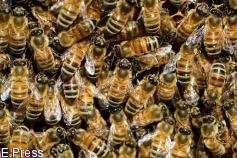 Más de 110 entidades piden apoyo a Tejerina contra tres insecticidas para las abejas en la votación de la UE