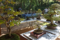 El Zoo de Guadalajara albergará este fin de semana una exposición de bonsais