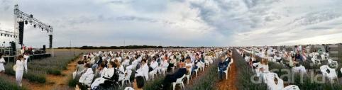 Más de 1.500 personas mezclan música, lavanda y solidaridad a favor de Nipace