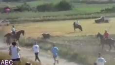 Pacma denuncia el atropello de un toro en el encierro por el campo de Centenera