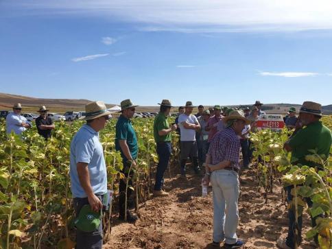 APAG organiza dos jornadas sobre cultivos de girasol y maíz