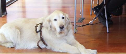 La Junta da el visto bueno al proyecto de ley de perros guía de C-LM y lo remite a las Cortes regionales