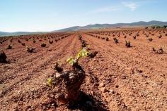 Agroseguro ha indemnizado ya el 90% de los daños en uva del vino en España, un total de 48 millones