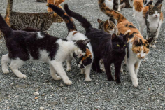 Vega del Henares realizará un diagnóstico de las colonias felinas