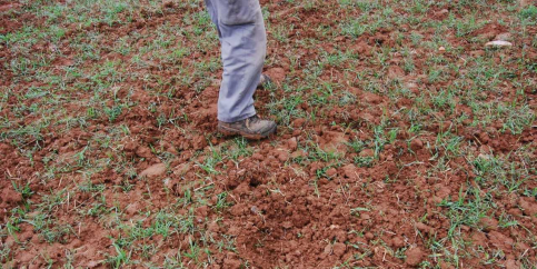 APAG alerta sobre los daños que la fauna causa en los cultivos de Guadalajara