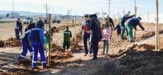 Azuqueca ya ha plantado 150 árboles junto a la A-2