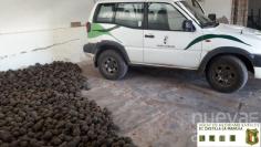 Agentes medioambientales decomisan 600 kilos de piñas recogidas de forma irregular