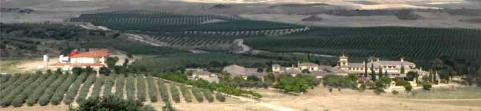 El mejor aceite de oliva virgen extra del mundo está en Castilla-La Mancha: CdH Picual