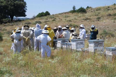 Los apicultores alcarreños podrán optar a un programa de tutela apícola
