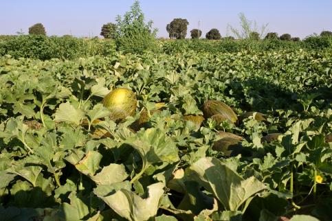 La Junta organiza un seminario nacional que debatirá las últimas novedades en I+D+i en cultivos hortícolas en septiembre