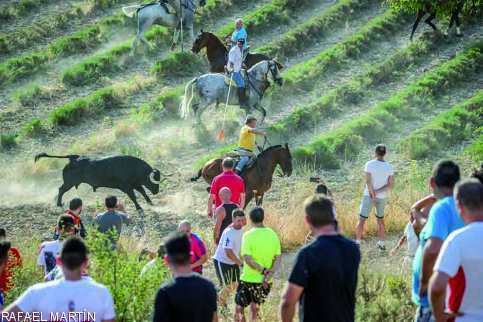 Cuatro toros de El Montecillo coparán la atención de miles de personas en el tradicional encierro de Brihuega