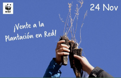 WWF plantará árboles este domingo en once puntos de toda España, entre ellos Castillejos, contra el cambio climático