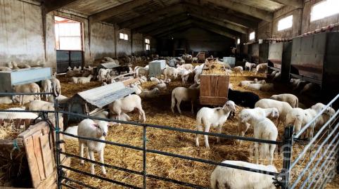 La Junta desembolsa este viernes 11,5 millones más de PAC para ganaderos