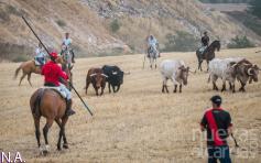 """Los ganaderos de reses bravas de la provincia tienen """"cierta esperanza"""" de contar con un verano con toros"""