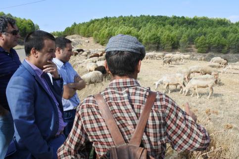 Este viernes se abonan cerca de 5 millones de euros en ayudas a agricultores y ganaderos, más de 1,8 para pastoreo