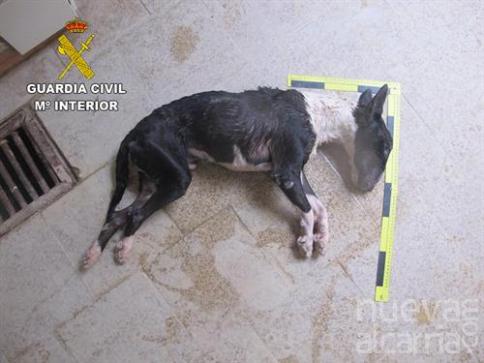 Investigan a un hombre en Brihuega acusado de dejar morir a su perro de hambre