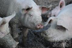 Ecologistas alega contra un proyecto ganadero en Tordesilos