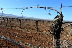 La dificultad de Guadalajara en incrementar las tierras de regadío le