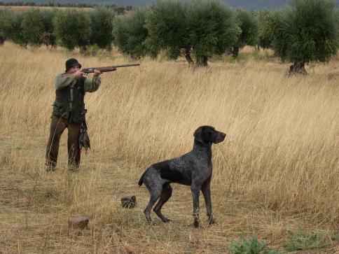 Castilla-La Mancha permitirá acceder a su territorio para cazar pese al cierre perimetral y declara 8 especies como caza necesaria