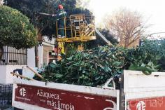El Ayuntamiento de Azuqueca refuerza la campaña de poda de cara al invierno