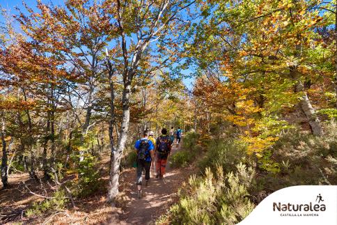 'Naturalea' el Parque Natural de la Sierra Norte de Guadalajara