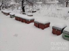 La cosecha de miel de romero en Guadalajara se verá favorecida por la gran nevada