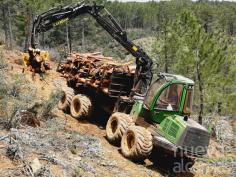 Leñas El Cardoso emplea a 10 trabajadores de la Sierra Norte