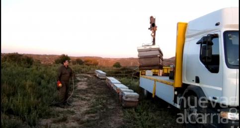 La cosecha de miel de romero en Guadalajara dará unos 50.000 kilos en la provincia y será