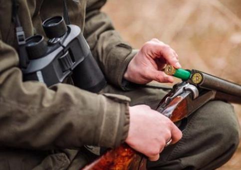 La nueva orden de veda de caza limita tórtola y estornino, pone cupo a codorniz y amplía plazo a jabalí y cabra montés