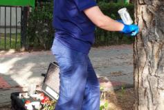 El Ayuntamiento de Azuqueca refuerza el servicio municipal de control integral de plagas en plantas de la vía pública