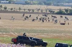 Dos heridos por asta de toro en Chiloeches, uno de ellos con cornada de 10 centímetros